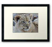 Male Lion Club Framed Print