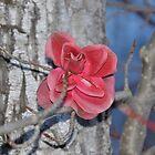 Soul Flower by Chickapeek