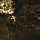 The Angry Otter by Gary Buchan
