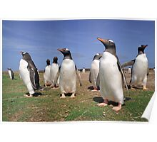 King penguins party Poster