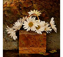 A Bag of Daisies Photographic Print
