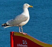 The Lifeguard ~ Lyme Regis by Susie Peek