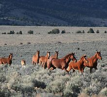 High Desert Band by Arla M. Ruggles