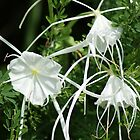 Spider Lilies in the Wild by Ruth Lambert