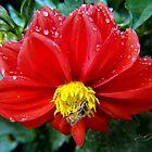 """Working In The Rain"" by Gail Jones"