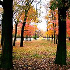 Autumn in the Park by shutterbugg73