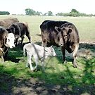 Friends come to say Moo to Casper by EdsMum