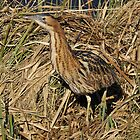 bittern breaks free by Grandalf
