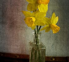 Spring Daffodils by Michelle Anderson
