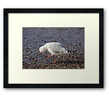 It's Time To Dance And Boogie On Down ! Framed Print