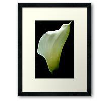 White flower 6584 Framed Print