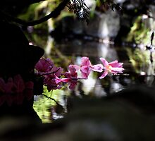 Magnolia petals in the water by Joy Danen