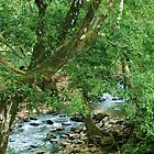 La Poza del Cajon, river near San Juan de Puriscal by Guy Tschiderer