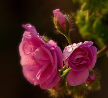 Rain drops on my flowers  by Andrea Rapisarda