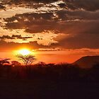 Serengeti Sunset by Michael Stiso