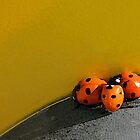 Ladybird Huddle by CarolM