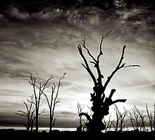 Silhouette at Lake Bonney by Bill Atherton