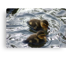 Twins chicks for Easter Canvas Print