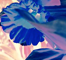 Sign of spring by Briana C