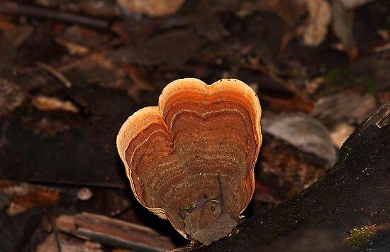 Fungi Wand by Sonya Byrne