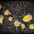 Yellow leaves by Silvia Ganora