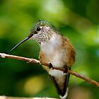 Eye to Eye with a Hummingbird by patti4glory
