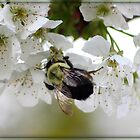 a busy bee  by MindsImage