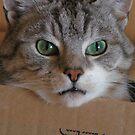 Oi this box is mine! Cat owns box. by patjila