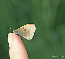 Small  heath butterfly, coenonympha pamphilus, on photographer's finger by pogomcl