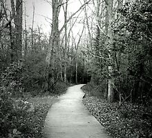 Pathways - Thousand Islands Park by shutterbugg73