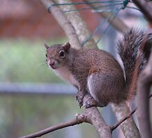 Squirrel That I Saw While Visiting an Animal Rescue Place by BCallahan