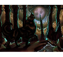 Howls of the harvest moon Photographic Print
