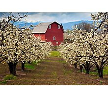 Red Barn Spring Photographic Print