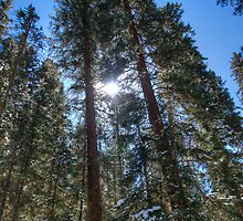 Wondering Through Telluride's Trails by 1832pro