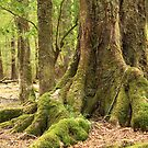 Mystical mossy forest 4 by Jenny Wood