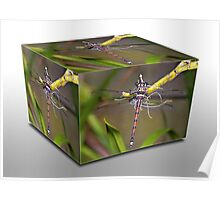 Dragon Fly Cube Poster