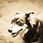 Spencer In Sepia by -gila-