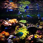 My Aquarium by anatunkia