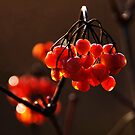 Berries2 by Hilary Robertshaw