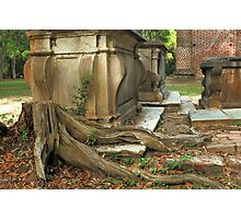 Confederate gravestone and live oak roots, Old Sheldon Church Ruins, Sheldon, South Carolina Photographic Print