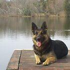 Simsek at the lake by GSDman