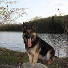 Simsek likes the lake by GSDman