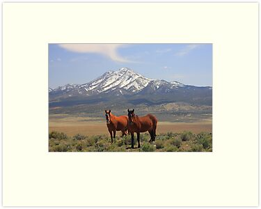 Where The Mustangs Roam by Gene Praag