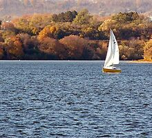 Sailing on the Bay by Losara