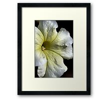 Yellow Veins Framed Print
