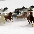 Horses by Peter Stratton