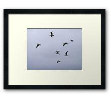 Gulls in a Storm (3) Framed Print