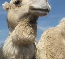 Camel-Gentry Zoo, Arkansas by llc2010