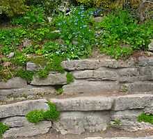 Stone Bench in Spring by MarianBendeth