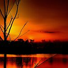 Red Night in The Everglades by JKKimball